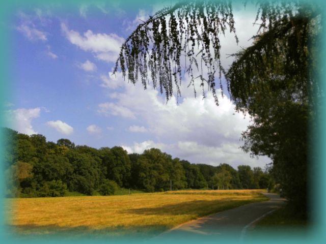 Elbinsel Pillnitz Naturschutzgebiet