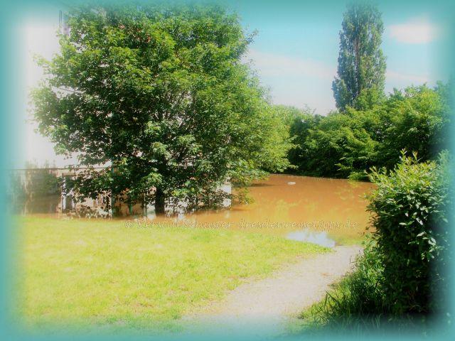 Überflutung Dresden