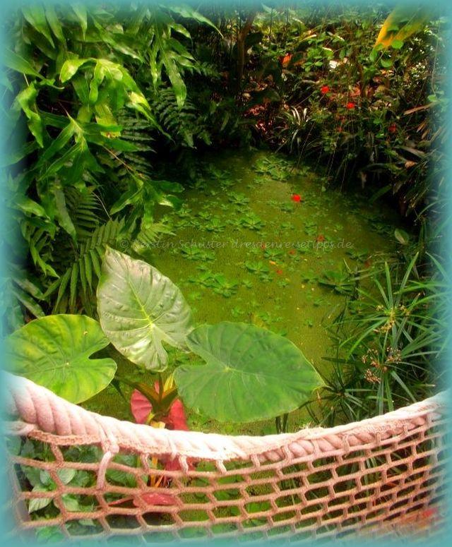 exotische Blüten botanischer Garten