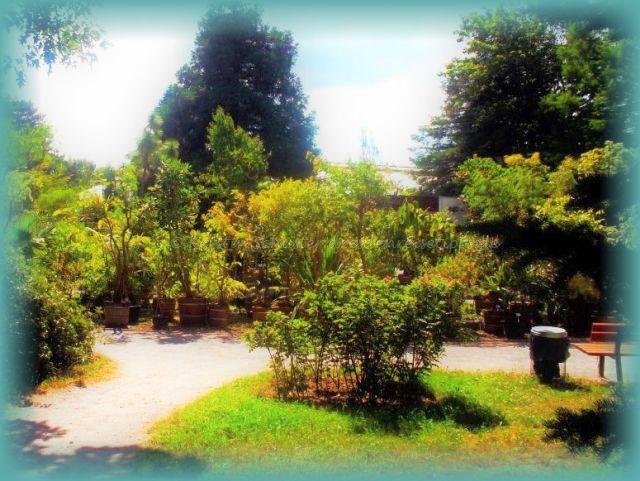 Sehenswerter Botanischer Garten