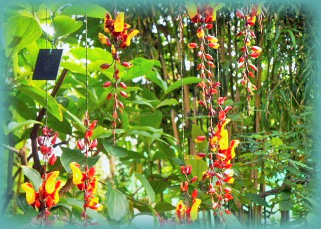 Hängepflanzen Botanischer Garten