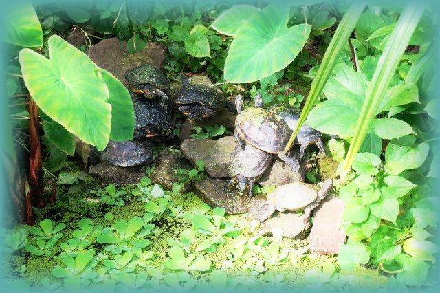 Tierwelt Botanischer Garten