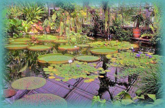 Riesenseerosen Botanischer Garten