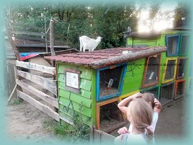 Dresdner Stadtkinder entdecken das Landleben