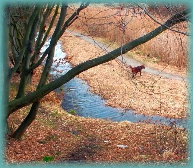 Urlaub Mit Hund Eingezäunter Garten: Urlaub Mit Hund In Dresden