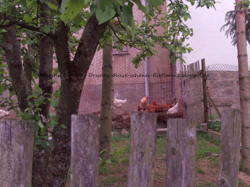 glückliche Hühner im reizenden Reitzendorf