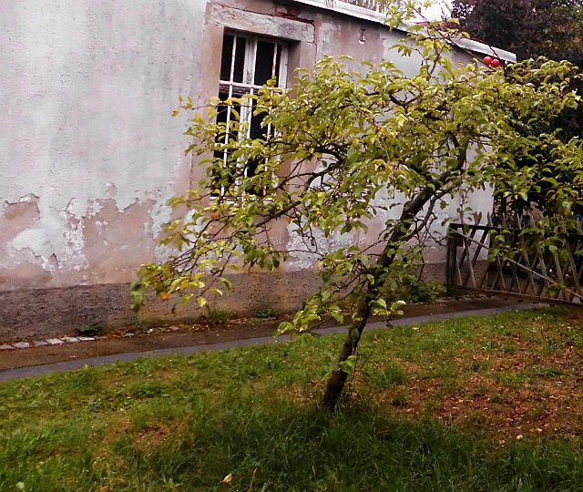 Apfelbaum Dresden Melli Beese Wohnhaus Laubegast