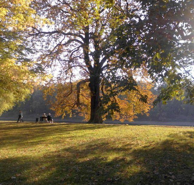Viele Bäume im Pillnitzer Schlosspark sind zum Teil schon uralt.
