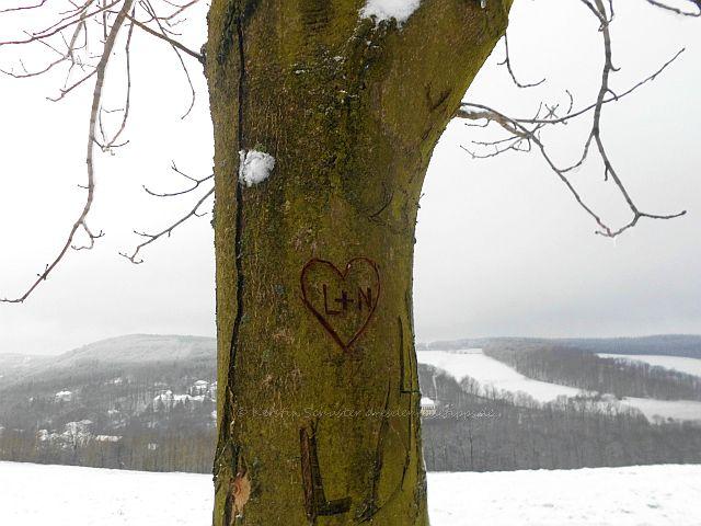 Baum am Rastplatz Blick Gottleubatal