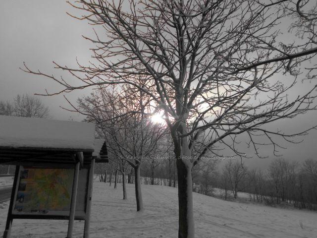 Urlaub im Winter Dresden Reisetipps