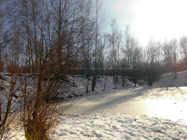 Froschteich Dresden Laubegast im Winter