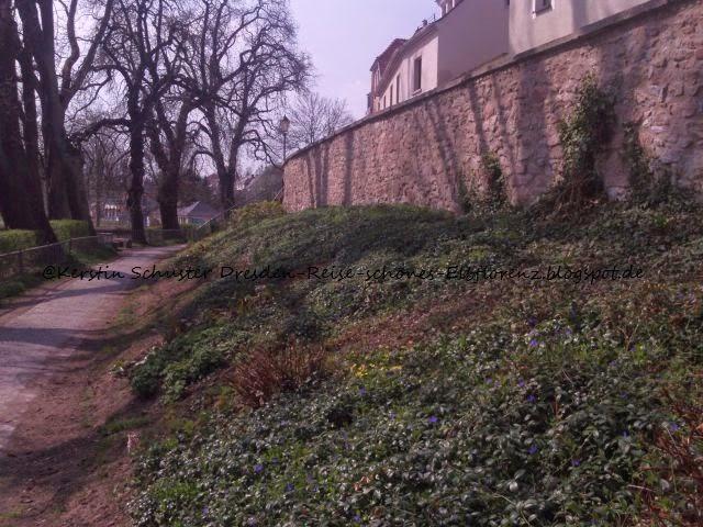 Froschteich Schiebock Stadtmauer