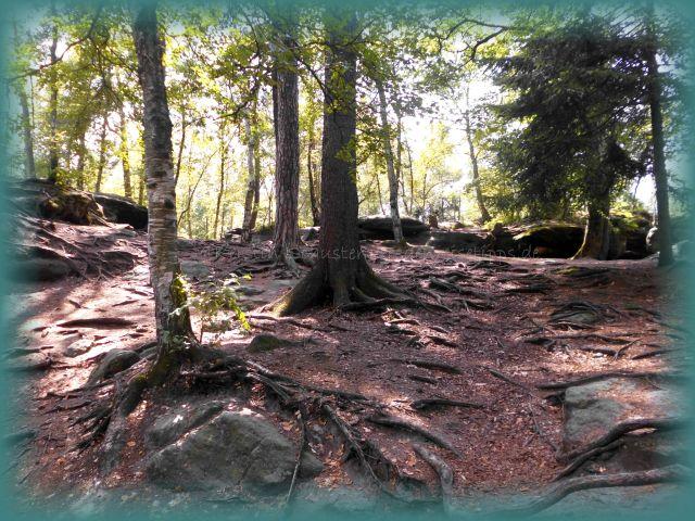 Nationalpark Sachsen Wälder betreten verboten