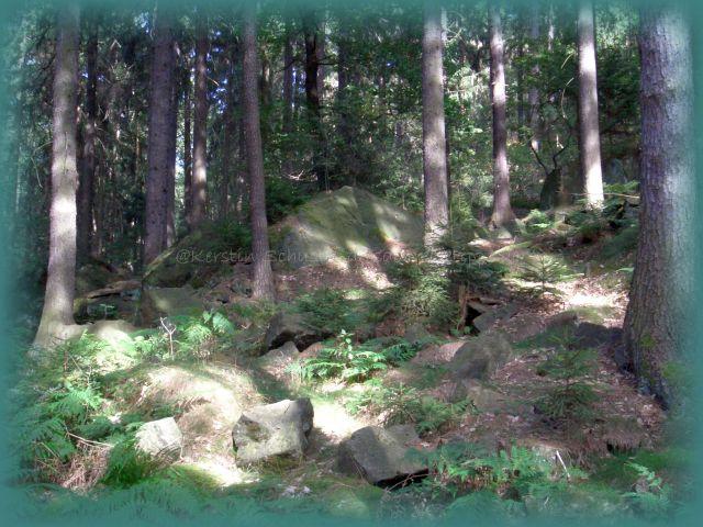 Waldbetretungsverbot Sächsische Schweiz Osterzgebirge