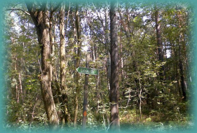 Wegweiser Felsenlabyrinth zwischen Leupoldishain und Langenhennersdorf