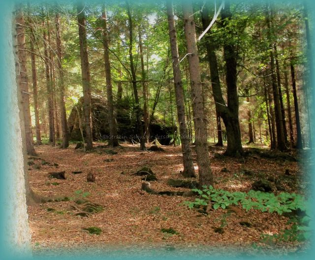 geführte Waldwanderung Sächsische Schweiz
