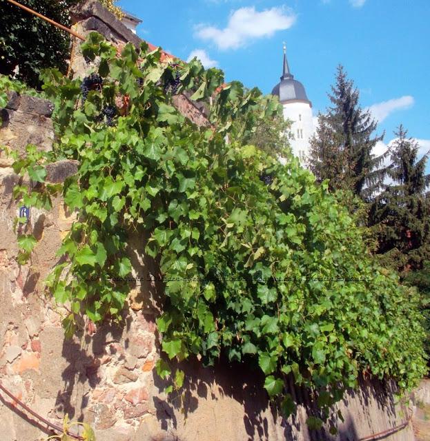 Wein aus Meißen Sachsens größtes Weinfest