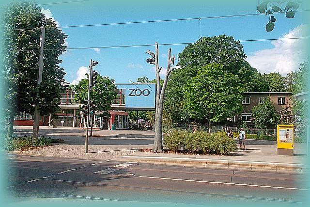 Haltestelle Dresdner Zoo