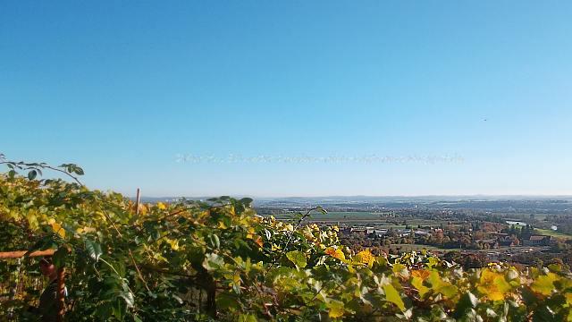 Weinverkostung auf dem königlichen Weinberg Pillnitz