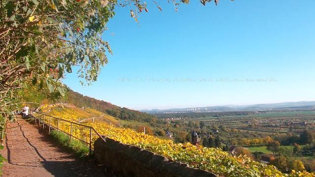 Indian Summer Pillnitz mit Weinverkostung im Herbst