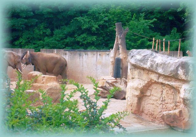 Elefantenhaus Dresdner Zoo geschlossen