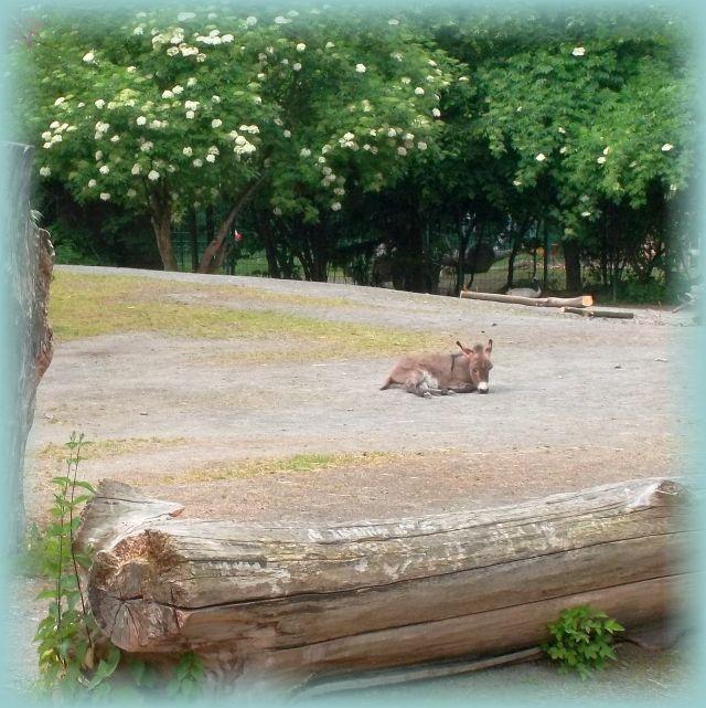 Corona Zwangspause für Zootiere