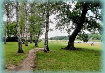 Park Birkenwäldchen in Kleinzschachwitz
