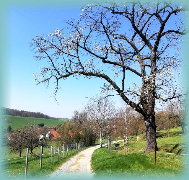 Wanderung Thürmsdorf Elbsandsteingebirge