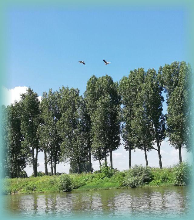Wasservögel am Himmel über der Elbe zwischen Dresden und Pirna