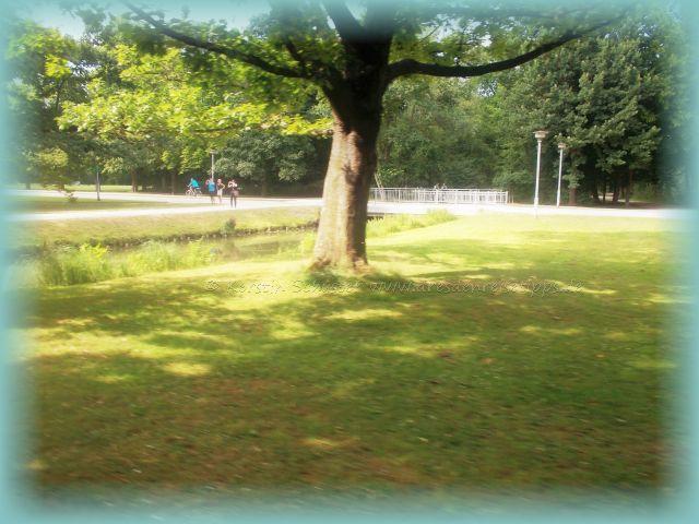 Hornissen greifen an Großer Garten Dresden